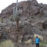cactus geant