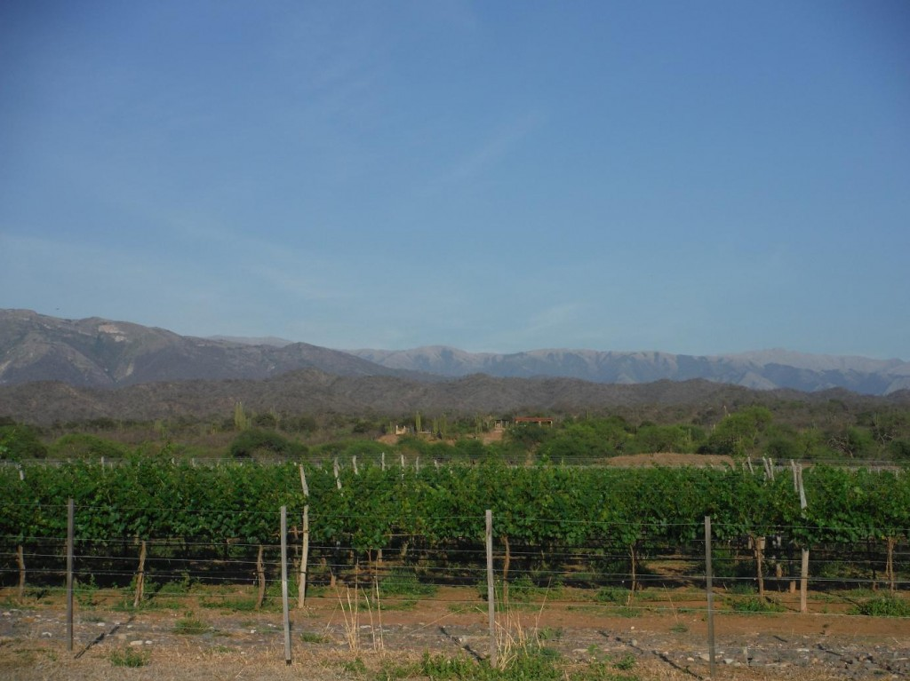 les vignes de la vina